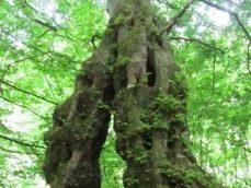 bomen die met elkaar vergroeid zijn